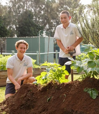 Kitchen gardens – sustainability action process (Years 3–6)